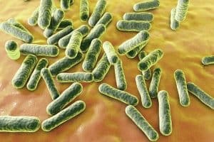 p. acnes bacteria
